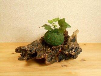 【温泉流木】繊細で美しい黒い台座 流木インテリア 流木アートの画像