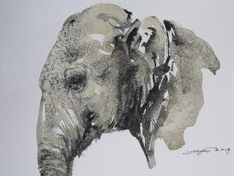 ゾウのポートレート(墨絵、水彩画用紙24cm×35,2cm)送料無料の画像