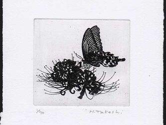 蝶と曼珠沙華/ 銅版画(作品のみ)の画像