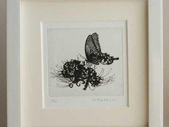 蝶と曼珠沙華/ 銅版画(額あり・ホワイト)の画像