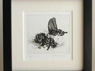 蝶と曼珠沙華/ 銅版画(額あり・ブラック)の画像
