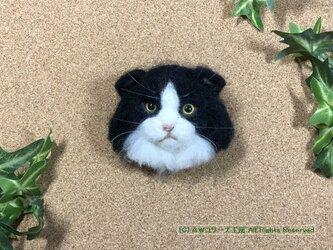 羊毛フェルトの猫ブローチ(スコティッシュ・フォールド:ハチワレ)の画像