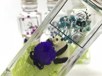 送料無料 ハーバリウムの動物園【panda】の画像