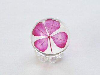 四つ葉ドロップ M (ピンク)の画像