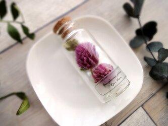 植物標本 Botanical Collection■No.4-D 千日紅 ローズネオン の画像
