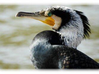 No.92 身近な野鳥たち その2 ポストカード5枚組 の画像