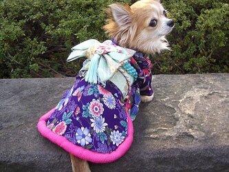 【犬着物】蝶 オーダーメイド 犬の着物 犬服の画像