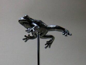 浮かぶ蛙の画像