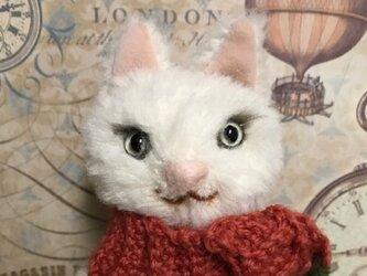 白猫(冬)の画像