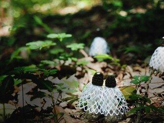 キヌガサタケのマグネットの画像