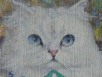ペルシャ・ホワイト(ブルーのリボン)の画像