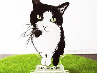 はちわれ猫のアクリルスタンドの画像