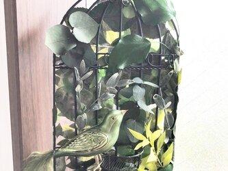 グリーンの木漏れ日鳥カゴの壁掛けアレンジ/プリザーブドフラワーの画像