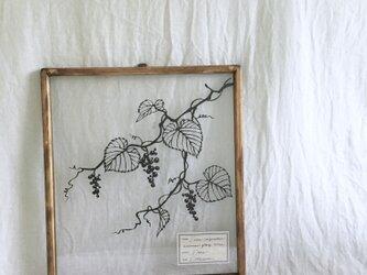 【植物標本シリーズ】ヤマブドウの切り絵フレームの画像