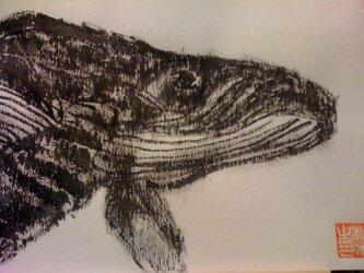 優雅に泳ぐ座頭鯨の画像