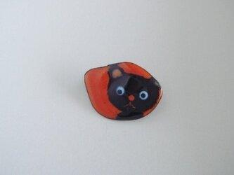 七宝 黒猫の画像