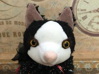 ビスコースのピエロ猫 ハチワレの画像