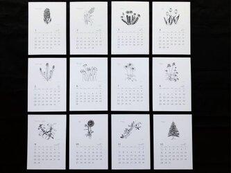 <75%OFF>日々花(にちにちか)2019  ポストカードカレンダーの画像