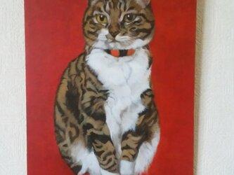 猫イラスト「赤いぐりこ」原画の画像