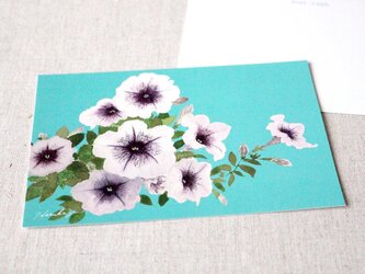 ポストカード2枚セット ペチュニアカプチーノの画像
