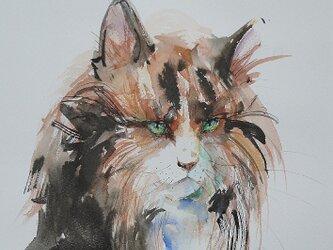 三毛猫のポートレート(墨絵、水彩画用紙24,5cm×35cm)の画像