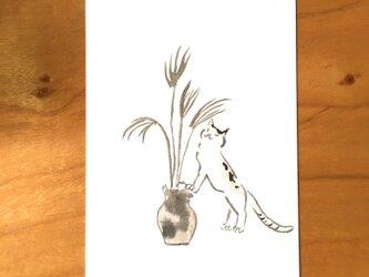 絵葉書/ポストカード <すすき>の画像