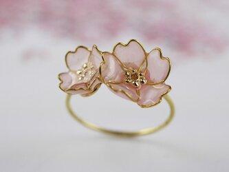 桜のリングの画像
