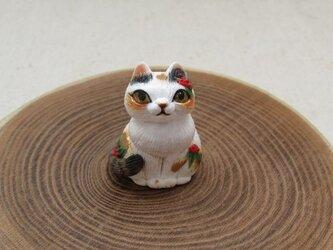 南天三毛猫の画像
