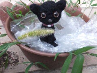 """""""チョコン""""と黒猫  ** 羊毛フェルト **の画像"""
