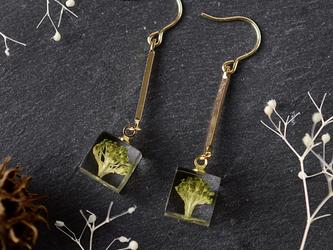 本物植物 ブロッコリーのロングピアス/イヤリングの画像