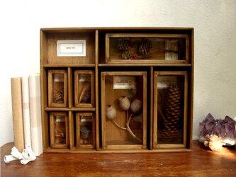植物種子標本箱(大)。の画像