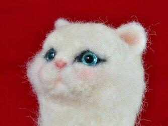 レディキャット*Lady Cat*白ペルシャ猫の画像