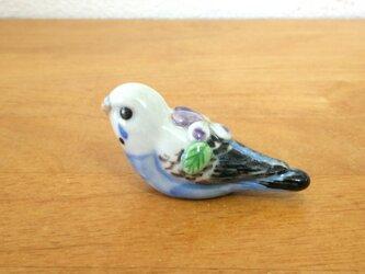 花小鳥/小(陶)セキセイインコ♂の画像