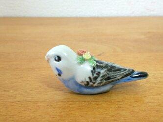 花小鳥/小(陶)セキセイインコ♀の画像