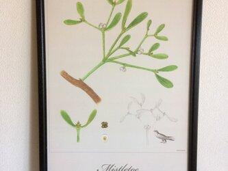 Mistletoe Poster  やどりぎポスター クリスマス インテリアの画像