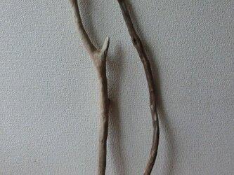 drift wood素材(75~90cm 2本セット)インテリアなどに人気です!の画像