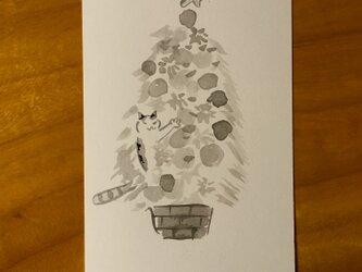 絵葉書/ポストカード <木登り>の画像