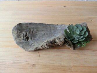 フェイクグリーン付き流木小物置きの画像