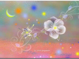 「月の眉の日に咲く花」 ほっこり癒しのイラストポストカード2枚組No.657の画像