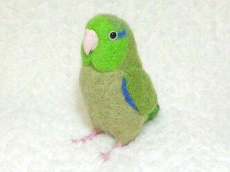リアルサイズ♪ マメルリハ  グリーン ノーマル 緑 羊毛フェルトの画像