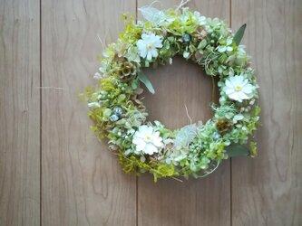 【送料無料】nonohana wreath [ジニア]の画像