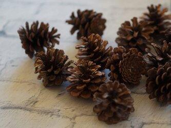 【送料無料♪クリスマス限定】松ぼっくり(ナチュラル)12個 松笠 ドライ天然素材の画像