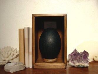 エミューの卵標本(色濃いめ)。の画像