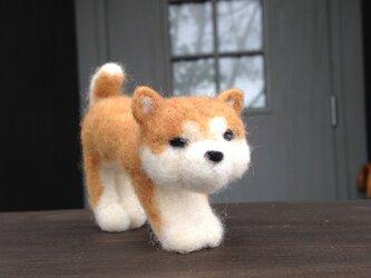 【羊毛フェルト】秋田犬のこどもの画像