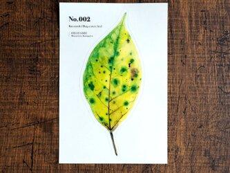 No.002 Kusunoko Bug-eaten leaf 透明ステッカーの画像
