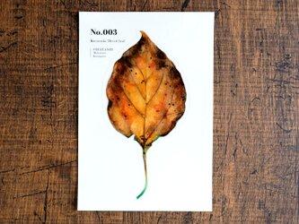 No.003 Kusunoko Dried leaf 透明ステッカーの画像