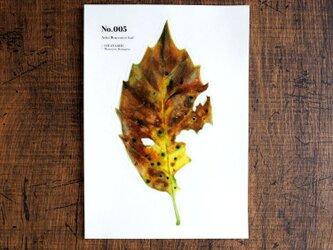 No.005 Aoki Bug-eaten leaf 透明ステッカーの画像