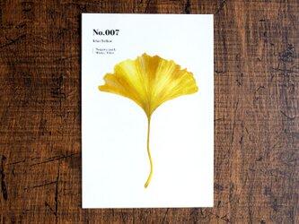 No.007 Icho Yellow 透明ステッカーの画像