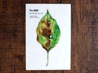 No.008 Kusunoki Bug-eaten leaf 透明ステッカーの画像