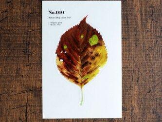 No.010 Sakura Bug-eaten leaf 透明ステッカーの画像
